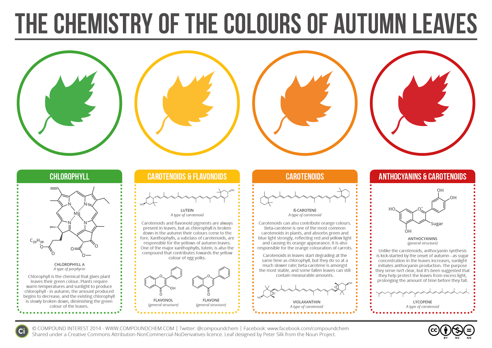 Chemistry-of-the-Colours-of-Autumn-Leaves-v2