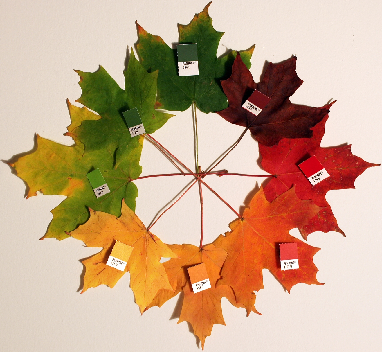 leaf-change